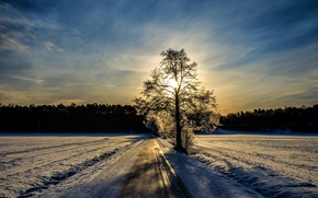 Picture winter, road, tree, morning