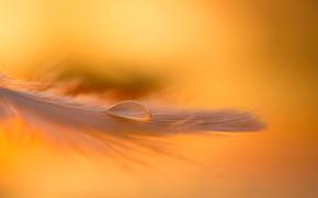 Picture macro, pen, drop, the evening, Golden light