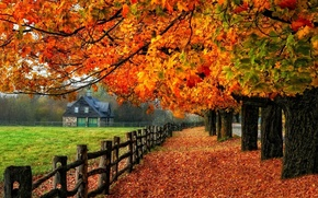 Picture autumn, trees, house, falling leaves, fence