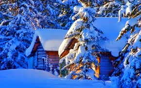 Picture forest, Winter, trees, landscape, nature, snow, houses, firs