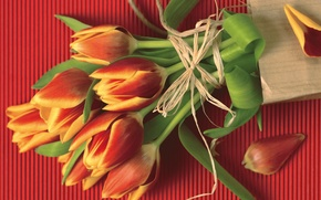 Picture red, bouquet, rope, petals, tulips