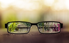 Wallpaper leaves, table, the fence, plants, glasses, lenses, vases, clear vision