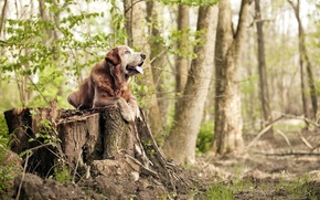 Picture forest, nature, dog