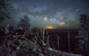 Picture forest, stars, landscape, night, logs, the milky way