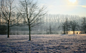 Picture sky, trees, winter, sun, Belgium, clearly