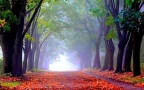 Picture autumn, Park, alley