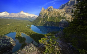 Picture forest, trees, mountains, nature, lake, valley, panorama