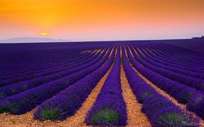 Picture field, France, lavender, plantation