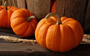 Picture wheat, autumn, ear, food, pumpkin, vegetables