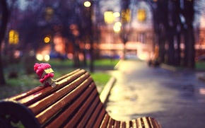 Picture The evening, Photo, The city, Trees, Bench, Hat, Alley, Danbo, Scarf, Focus, Box, Shop