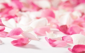Picture love, flowers, red, pink, mood, rose, rose petals