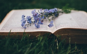 Picture macro, flowers, book