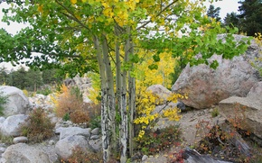 Picture autumn, the sky, trees, stones, slope