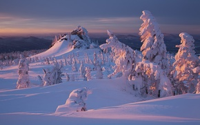 Wallpaper nature, sunset, snow, forest, winter