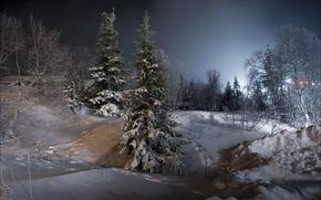 Picture winter, snow, landscape, night, tree