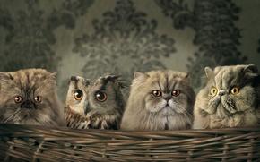 Wallpaper Koshak, owl, Wallpaper, Basket