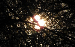 Picture the sun, hope, Forest