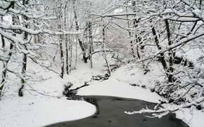 Picture winter, forest, water, snow, nature, frost, forest, Nature, water, winter, snow, frost