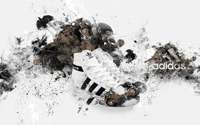 Picture bird, Adidas, adidas, sneakers, brand, brand