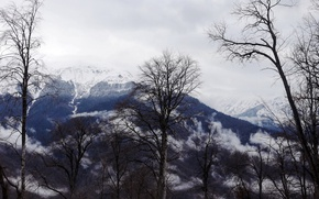 Picture trees, mountains, background