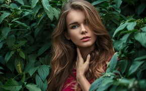 Picture look, leaves, girl, face, green, portrait, light, brown hair, art, beautiful, beauty, inspiration, amazing, lips, …