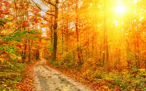 Picture rays, light, Nature, Autumn, Trees, Leaves, Road, Forest