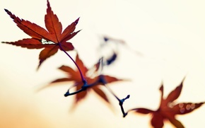 Picture leaves, macro, nature