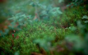 Picture grass, macro, nature, macro