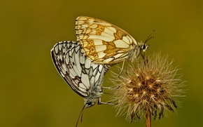 Picture flower, butterfly, plant, moth
