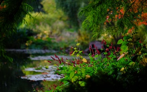 Picture branches, pond, Park, England, bokeh, England, Hampshire, Hampshire, Romsey, Sir Harold Hillier Gardens, Romsey