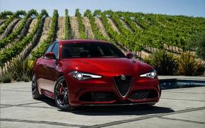 Wallpaper Alfa Romeo, Alfa Romeo, Four-leaf clover, Giulia, Julia