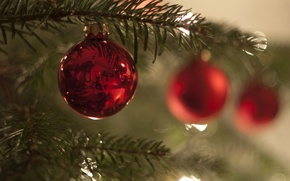 Picture balls, tree, new year, Christmas, branch, decoration