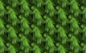 Picture sprig, background, spruce, texture, tree