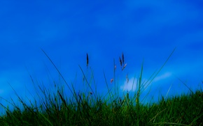 Picture the sky, grass, nature, plant
