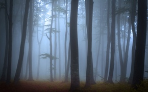 Picture fog, trees, forest, landscape, nature