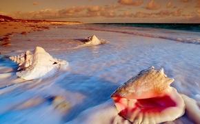 Picture sea, shore, Shell