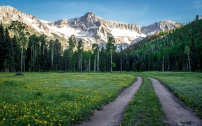 Picture road, forest, the sky, grass, snow, flowers, mountains