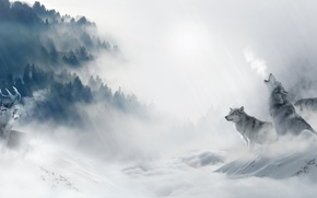 Picture cold, winter, forest, snow, trees, fog, predators, pack, deer, art, wolves, hunting, mining