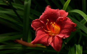 Picture macro, flowers, red, nature, plants, petals