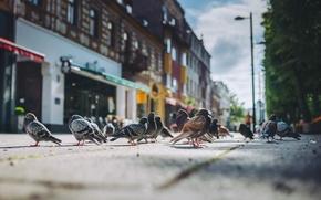 Picture Birds, Summer, Lithuania, Kaunas