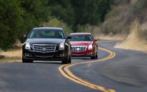 Picture road, trees, cars, road, trees, cadillac, way cars
