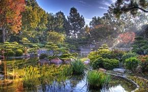 Picture pond, Japan, Japanese garden