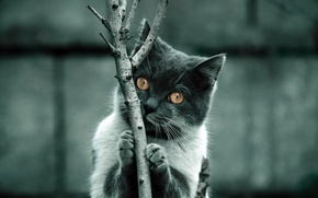 Wallpaper branch, fur, Feline