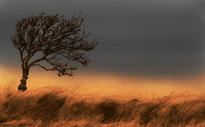 Picture field, autumn, the sky, grass, tree, the wind