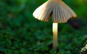 Wallpaper green, Mushrooms