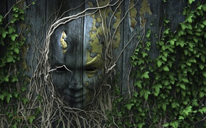 Picture nature, face, roots, the fence, ivy