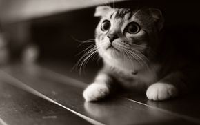 Picture cat, kitty, kitten, cat