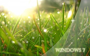 Picture grass, the sun, light, Rosa, green, system