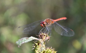 Picture animals, insects, dragonfly