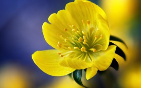 Picture flower, macro, yellow, yellow, purple